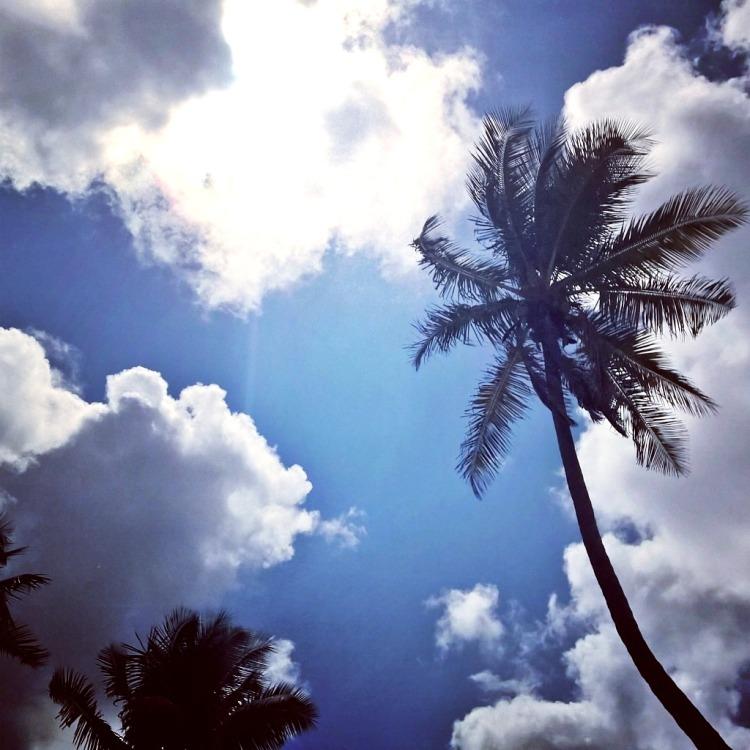 14.04.15 - Nassau, palmer