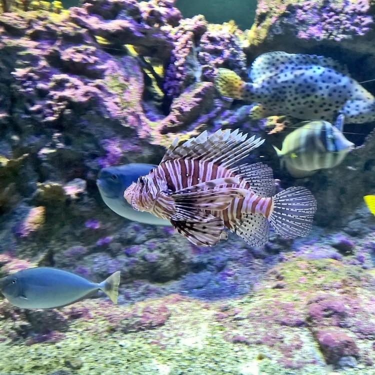 23.05.15 - Stripet fisk i Genova